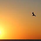 Lonely Bird by Glenn  Cramsie