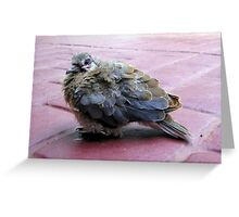 A baby dove Greeting Card