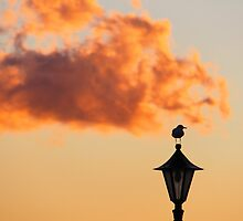 Bird On A Lamp by Emma Holmes