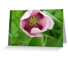 Cruciform Pattern to Center of Wild Opium Poppy! Greeting Card