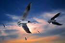 Seagulls at Sunset by Henry Jager