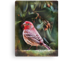 Little Bird IV (Art & Poetry) Canvas Print