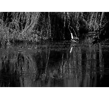"""The Bayou"" Hyde Park, Northbridge, W.A. Photographic Print"