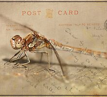 Dragonfly Postcard by Catherine Breslin