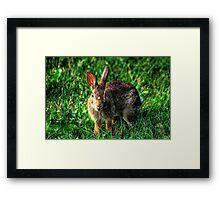 Rabit Framed Print