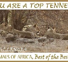 Challenge Top Ten Banner by Magaret Meintjes