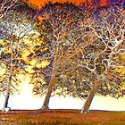 Three trees on a Somerset hill v2 by heidiannemorris