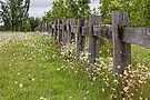 Fence and Wildflowers by William Bullimore