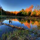 Fall Reflections by Andre Faubert