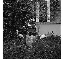 Bear and Flamingos Photographic Print