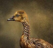 Gosling Profile by Pat Abbott