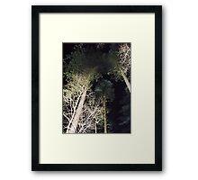 midnight trees Framed Print