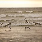 Where Do Gulls Find Shelter by CormacEby