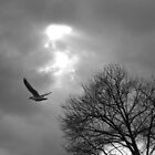 Flight B&W by elasita