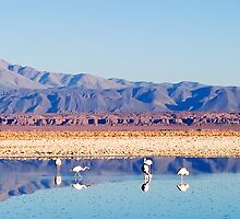 Flamingos on the Lake by Fran53