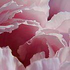 Pink Peony 1 by Simon Hickie