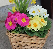 Flower Basket in Spring by karina5