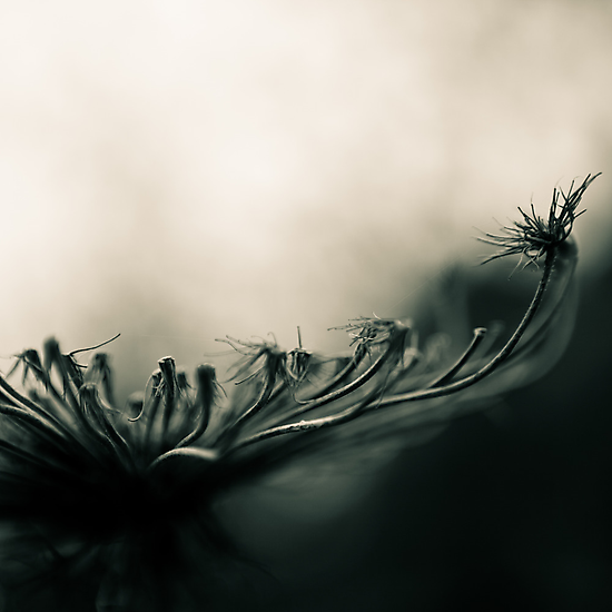 thin things by Victor Bezrukov