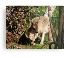 I'll Sneak away whilst mums not looking. Joey, back patio.S.Aust. Metal Print