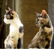 Athenian Cats by James Stratford