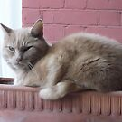 Nextdoor neighbour cat -(110312)- digital photo by paulramnora