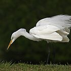 Egret by Jim Cumming