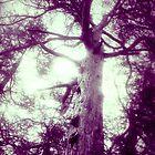 Tree Thru A Lens by jonvin