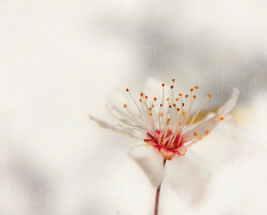 blossom by Ingz