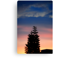 Norfolk Island Pine Sunset Canvas Print