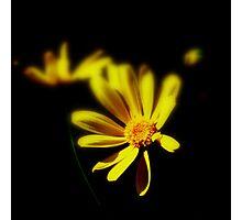 Light through the Dark Photographic Print