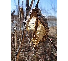 Tattered and Torn Photographic Print