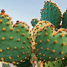 Sweetheart Cactus by Tracy Riddell
