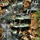 Butterfly Falls by Virginia N. Fred