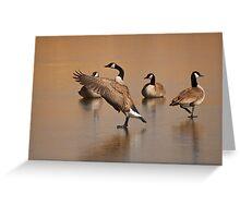 Wild Goose Waltz, Canada goose in Montana Greeting Card
