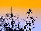 birds at sunset by Karl David Hill