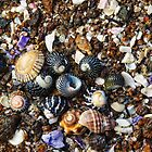 Seashells on the sea shore by Flux Photography