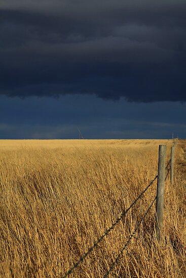 Prairie Storm by Alyce Taylor