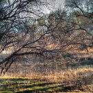 Branch of Spring by Kgphotographics