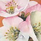 Blossom by Val Spayne