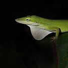 Green Anole by Jim Cumming