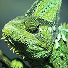 Chameleon Portrait by laurenisawesome