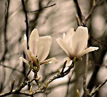 Magnolia, you sweet thing... by Gregoria  Gregoriou Crowe