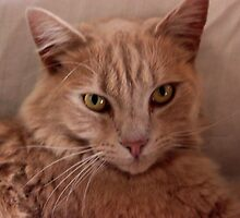 Kelly's Cat....Neville....His Name is Neville by Michelle  Evans-Catherall