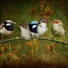 Fairy-wren Fantasy by Barb Leopold