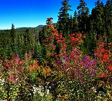 Full Fall Colors by Charles & Patricia   Harkins ~ Picture Oregon