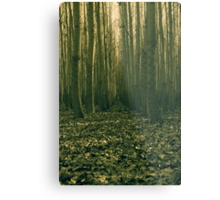 forest trial Metal Print