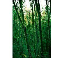 Green machina Photographic Print