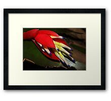 Sultry bromeliad bloom Framed Print