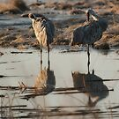 Monte Vista Sandhill Cranes 1 by KatsEyePhoto