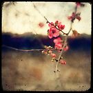 Japanese Spring by Marc Loret